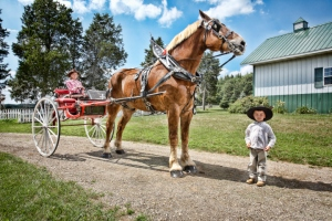 Big Jake is the tallest horse. Those aren't little kids pictured there. They are big strapping Amish lads. These young men lift bales of hay with their own two hands.