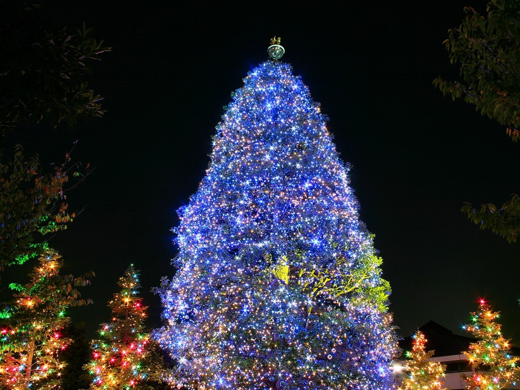 19 Days Until Christmas – Beautiful Christmas Trees  Legendary Post
