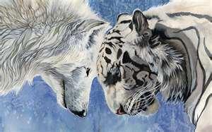 wolf tiger