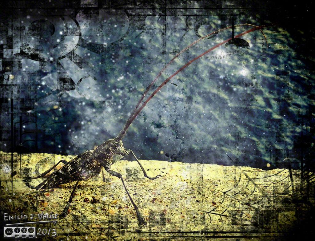 20130802_075909_HDR_1_Rusty_Canopus_Web_DIGI